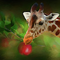 Baby Giraffe Wants The Apple - Painting by Ericamaxine Price