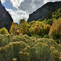 Backlit Fall Colors In Glenwood Canyon by Ray Mathis