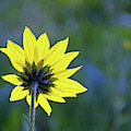 Backward Flower by Bruce Gourley