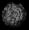 Backyard Flowers In Black And White 54 by Brian Carson