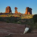 Balanced Rock And Bison Skull, Arches National Park, Southwest A by TL Mair