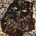 Baldrick The Persian Cat by Peggy Collins