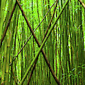 Bamboo X by Christopher Johnson