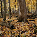 Bare Mushroom Fall by Dylan Punke