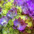 Barely Purple 9080 Idp_2 by Steven Ward