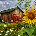 Barn Meadow Flowers IIi by Debra and Dave Vanderlaan