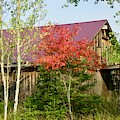 Barn With A Purple Roof by Stephanie Moore