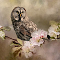 Barred Owl Floral - Painting by Ericamaxine Price