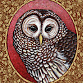 Barred Owl Portrait - Brown Border by Amy E Fraser
