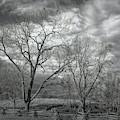 Barren Fields by John M Bailey