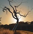 Barren Sunset by Gregory Ballos