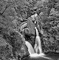 Bash Bish State Park Fall Foliage Black And White by Adam Jewell