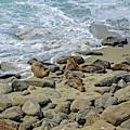 Basking On La Jolla Shores 3 by Lynda Lehmann
