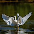 Battle On The Pond by Lorraine Harrington