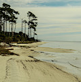 Beach And Trees by Maggy Marsh