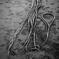 Beach Bones 3 by Peter Tellone