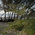 Beach Hideout - Breach Inlet by Dale Powell
