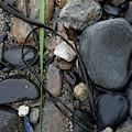 Beach Kanji by Kirsten O'Leary