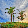 Beach Sunrise Over The Palms by Lynn Bauer