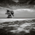 Beach Tree by Dave Bowman