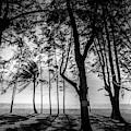 Beach Trees Silhouettes by Georgia Fowler