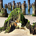 Beached Walrus At Cape Charles Virginia by Bill Swartwout Photography