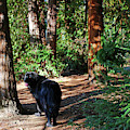 Bear In The Woods by Christine Mullis