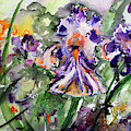 Bearded Iris Splendor Watercolor by Ginette Callaway