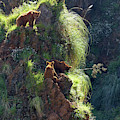 Bears On A Rock by Phil Banks