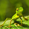 Beautiful Animal In The Nature Habitat by Ondrej Prosicky