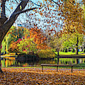 Beautiful Autumn Colors In The Boston Public Garden Boston Ma by Toby McGuire