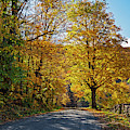 Beautiful Autumn Road In Woodstock Vt Vermont by Toby McGuire