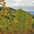 Beautiful Fall Color Along Owl Creek Pass Road by Ray Mathis