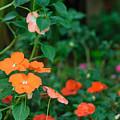 Beautiful Orange Flower, Naturally by Pongmoji