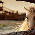 Beautiful, Quiet, White Horse Waits In by Alekuwka