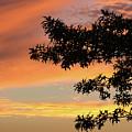 Beautiful Sunset by Shot City Media