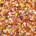 Bed Of Autumn Leaves by Todd Klassy