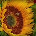 Bee-ing Happy by Judy Hall-Folde