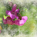 Bee On Texas Ranger Blossom Antiqued And Aged by Colleen Cornelius