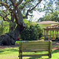 Been Here Awhile Tree In Park by Roberta Byram