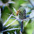 Bee's Got The Blues by Susan Warren