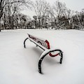 Bench In The Snow G0853398 by Michael Thomas