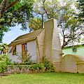Bermuda Botanical Gardens by Betsy Knapp