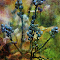 Berry Outreach 6127 Idp_2 by Steven Ward