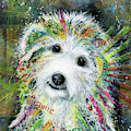 Bichon Frise by Patricia Lintner