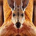 Big Boy Red Kangaroo   by Joan Stratton