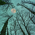Big Moon Over The Trees by Núria Talavera