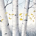 Birch Trees With Flowing Leaves In Watercolor by Christopher Shellhammer