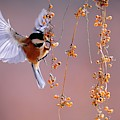 Bird Eating On The Fly by Top Wallpapers