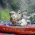 Bird In A Bath by Dawn Hough Sebaugh